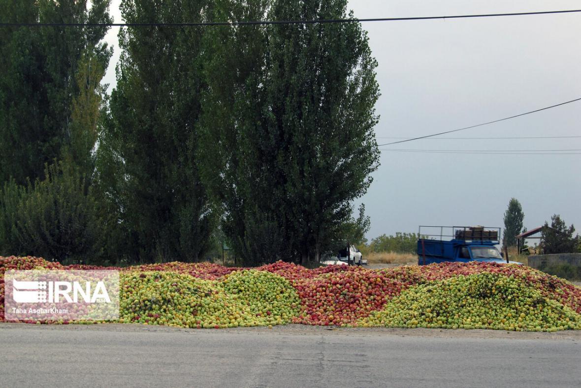 خبرنگاران بی توجهی به کیفیت؛ آسیب پذیری بزرگترین بازار سیب کشور