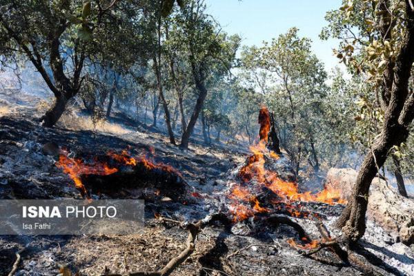 آسیب جدی آتش سوزی ها به 1850هکتار جنگل کهگیلویه و بویراحمد، کمبود 240قرقبان