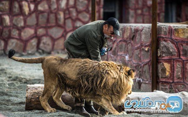 دهکده طبیعت، جایی برای تمرین مهربانی با حیوانات