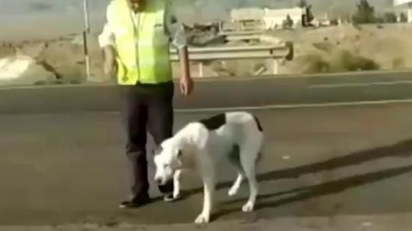 فیلم احساسی از پناه دادن به سگ زخمی به وسیله پلیس مهربان در نیشابور